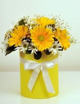 Sarı Silindir Kutuda Alman Papatyaları  çiçek gönder