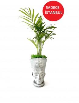 Nefertiti Chamadore  çiçek gönder