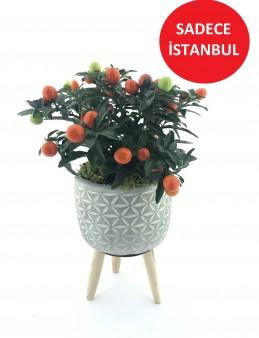 Solanum Saksı Çiçeği ( Süs Domatesi )  çiçek gönder