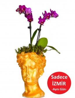 Helen de Orkide Bir Başka  çiçek gönder
