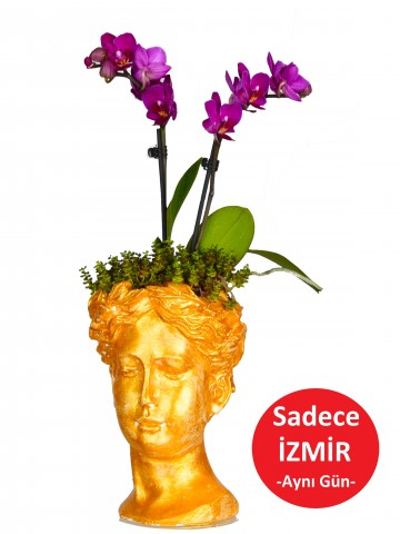 Helen de Orkide Bir Başka Orkideler çiçek gönder