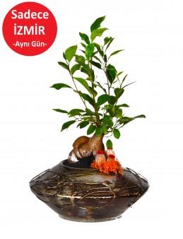 Minyatür Manolya Bonzai  çiçek gönder