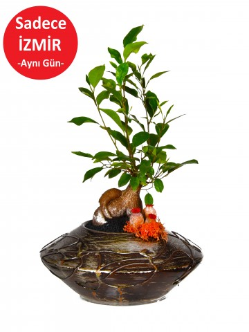 Minyatür Manolya Bonzai Saksı Çiçekleri çiçek gönder