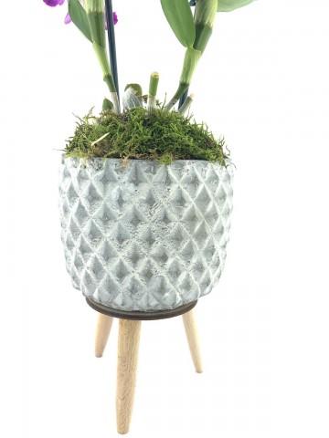 Dendroium Bambu Orkide Orkideler çiçek gönder