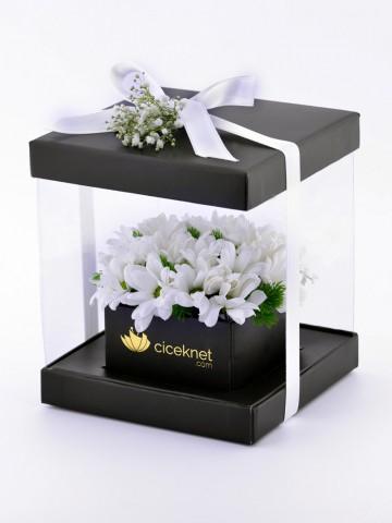 Şeffaf Kutuda Papatyalar Kutuda Çiçek çiçek gönder