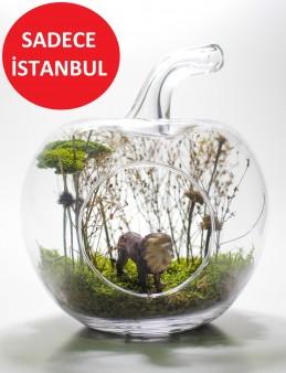 Yapay Teraryum Ormanların Kralı Gümüş Göz Terarium çiçek gönder