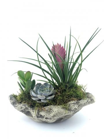 Doğal Güzellikler Saksı Çiçekleri çiçek gönder