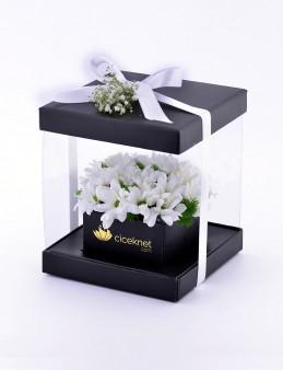 Şeffaf Kutuda Papatyalar  çiçek gönder