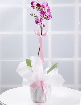 Tek Dallı Pembe Orkide Çiçeği  çiçek gönder