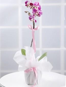 Tek Dallı Pembe Orkide Çiçeği.  çiçek gönder