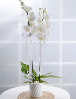 Masumiyet Timsali Beyaz Orkide  çiçek gönder