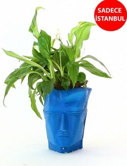 Nefertiti Saksıda Bitki Aranjmanı  çiçek gönder