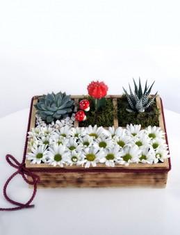Papatya Bahçesi Teraryum  çiçek gönder
