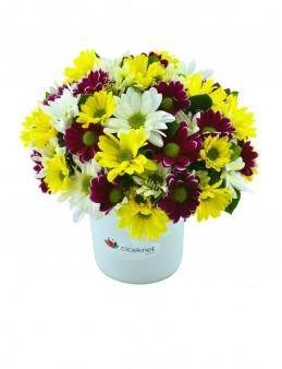 Renk Cümbüşü Papatya Aranjmanı  çiçek gönder