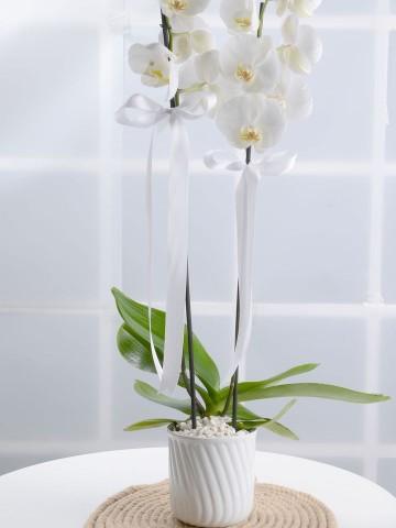Masumiyet Timsali Beyaz Orkide Orkideler çiçek gönder