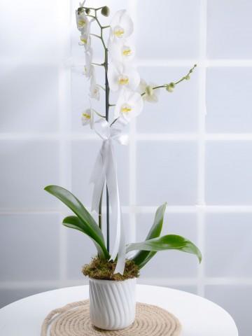 Masumiyet Timsali Tek Dallı Beyaz Orkide Orkideler çiçek gönder