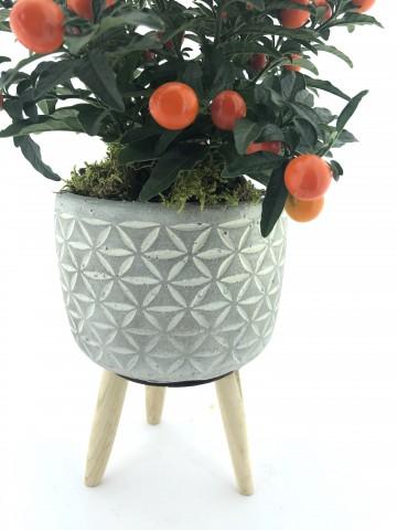 Solanum Saksı Çiçeği ( Süs Domatesi ) Saksı Çiçekleri çiçek gönder