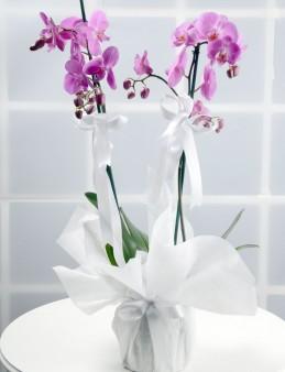 Toprak Kokusu Pembe Orkide Çiçeği.  çiçek gönder