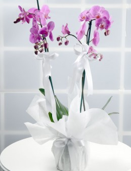 Toprak Kokusu Pembe Orkide Çiçeği..  çiçek gönder