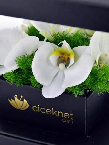 Pileksi Kutuda Orkide Orkideler çiçek gönder
