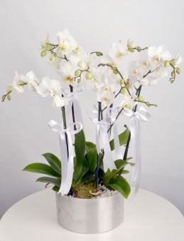 5 Dal Beyaz Orkide   çiçek gönder