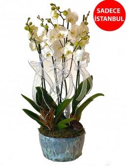 5 Dallı Butik Orkide   çiçek gönder