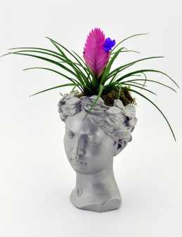 Helen de  Tilandisia Saksı Çiçeği  çiçek gönder