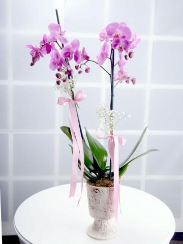 Gündüz Düşleri Pembe Orkide Çiçeği Orkideler çiçek gönder