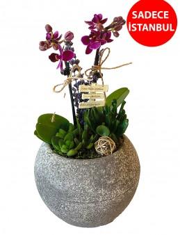 Butik Mini Orkide Aranjmanı Orkideler çiçek gönder