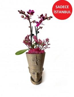 Nefertiti Mini  Orkide   çiçek gönder