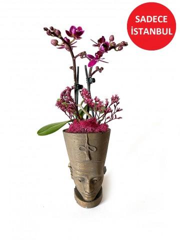 Nefertiti Mini  Orkide  Saksı Çiçekleri çiçek gönder