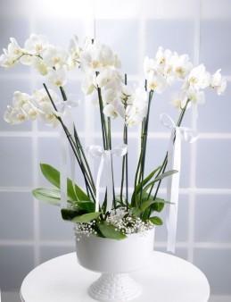 Beyaz Kuğu 8 Dallı Beyaz Orkide Çiçeği  çiçek gönder