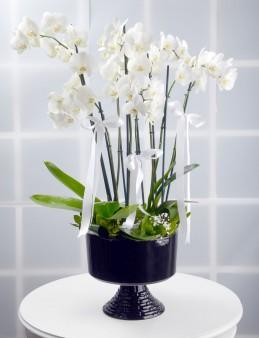 8 Dallı Beyaz Orkide Çiçeği.  çiçek gönder