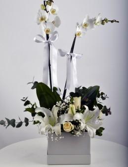 Kare Kutuda Orkide Şöleni  çiçek gönder