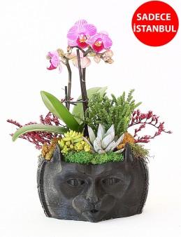 Tasarımlı Saksıda Mini Orkide li  Teraryum  çiçek gönder