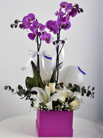 Fuşya Hediyelik Kutuda Çift Dallı Fuşya Orkide Çiçeği Orkideler çiçek gönder