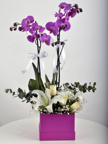 Çift Dallı Fuşya Orkide Arajmanı Orkideler çiçek gönder