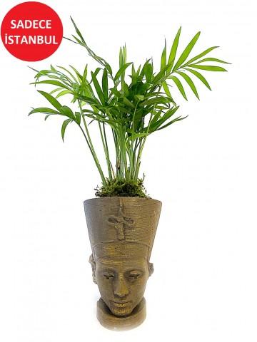 Nefertiti Butik Bitki  Saksı Çiçekleri çiçek gönder