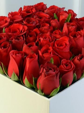 Beyaz Kare Kutuda Kırmızı Gül Aranjmanı. Kutuda Çiçek çiçek gönder