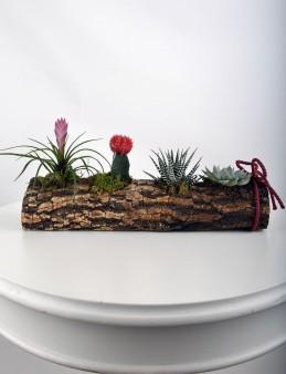 Sukulent Seti Teraryum  çiçek gönder
