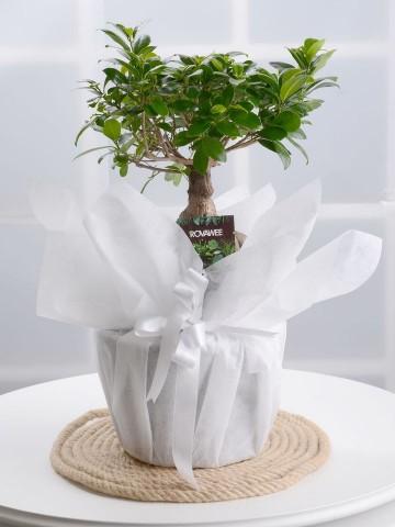 Manolya Bonsai Saksı Çiçekleri çiçek gönder