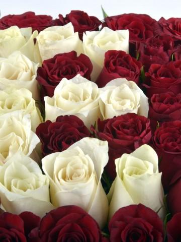 Kalbindeki Harfi Güllerle Yaz Kişiye Özel Baş Harf  Harfli Çiçek çiçek gönder