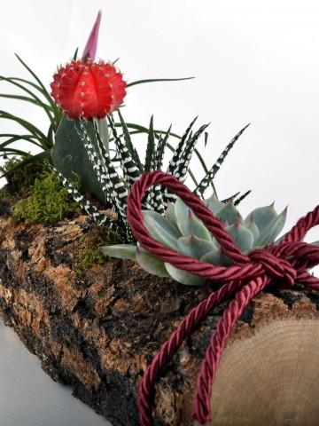 Sukulent Seti Teraryum Terarium çiçek gönder