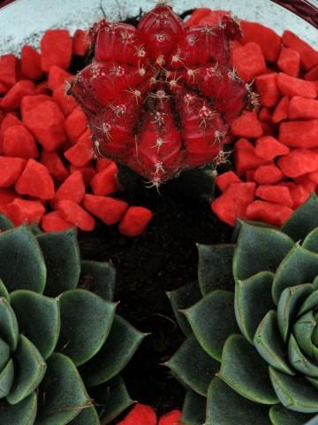 Paşabahçe Fanusta Teraryum Terarium çiçek gönder