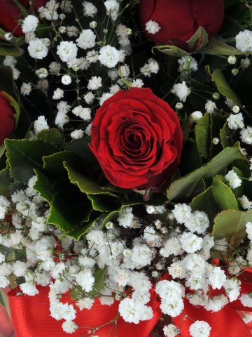 Fanus Vazoda 7 Kırmızı Gül Arajmanı.. Aranjmanlar çiçek gönder