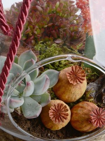 Armut Camda Sukulent Bahçesi Terarium çiçek gönder