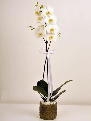 Orkidemsin Orkideler çiçek gönder