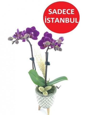 3 Ayaklı Seramikte Mini Orkide Orkideler çiçek gönder