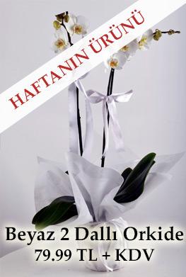 Haftanın Ürünü: Beyaz 2 Dallı Orkide Çiçeği