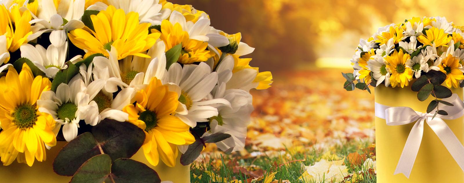 Sonbahar Çiçekleri